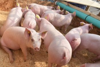 Jim Long Pork Commentary – June 22nd, 2020